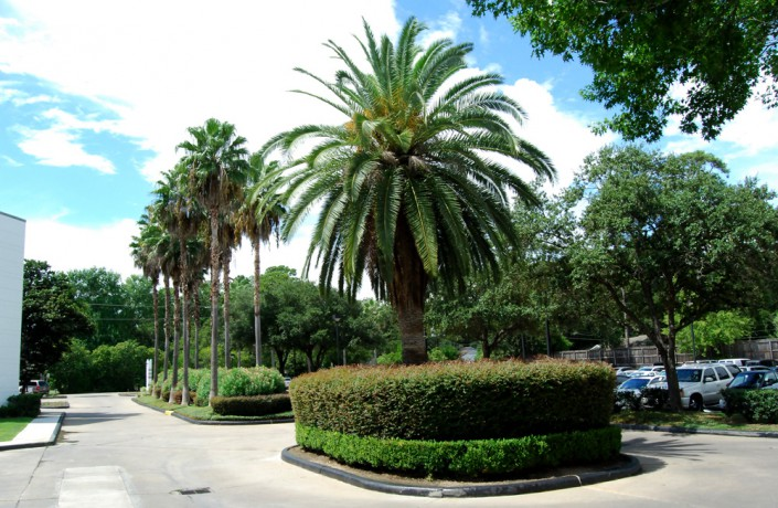 commercial landscaping, tree service, houston