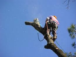 tree services, houston